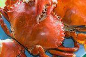 Meeresfrüchte (Krabben)