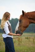 picture of feeding horse  - Woman giving horse a treat for a good job