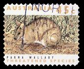 AUSTRALIA - CIRCA 1992: a stamp printed in the Australia shows Parma Wallaby, Macropus Parma, Marsup