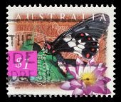 AUSTRALIA - CIRCA 1997: A stamp printed in Australia shows Big Greasy Butterfly and blue lily (Nymph