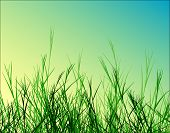 Grass on Blue Sky Vector
