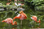 Pink Flamingo In Florida
