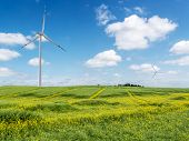 Green field with three wind power generators against blue sky