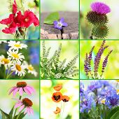 Collage of wildflowers