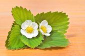 Strawberry Flowers And Leaves Against Wooden Table