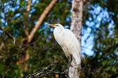 Egret Near A River In A Tropical Rain Forest