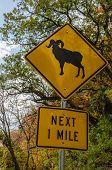 Big Horn Sheep Warning Sign