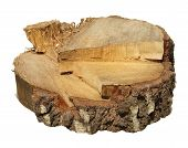 Piece Of Tree Trunk Isolated On White Background