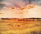 sunset in the fields, retro filtered, instagram style