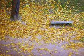 Bench And Maple Leaves In City Park In The Autumn