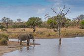 Elephant Drinking Water At Waterhole