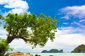 Branches Overhanging Island Lagoon