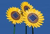 Sunflowers with solar cells