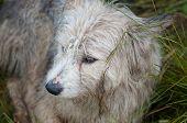 Dog Shepherds