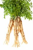 Root Parsley In A Bunch