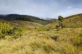 Horton Plains National Park. Sri Lanka