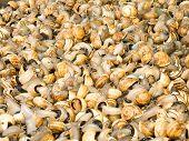 Snails In A Market.