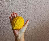 Jewish holiday - Sukkot. Ritual fruit - etrog in a female hand