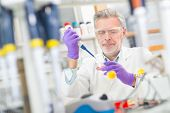 image of working animal  - Life scientist researching in laboratory - JPG