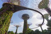 The Botanical Pathway Of Garden By The Bay