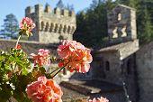 Flowers in a castle