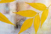 Autumn leaves on window glass close-up