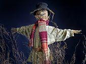 Scarecrow on dark blue background