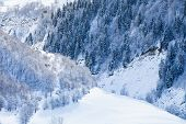 picture of coniferous forest  - Deciduous and coniferous forest on the snowy slopes Caucasus - JPG
