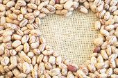 picture of pinto  - beautiful macro of colored pinto beans in studio - JPG
