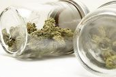 pic of ganja  - cannabis and marijuana on a white background - JPG