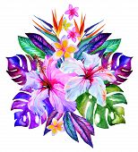pic of bird paradise  - central tropical composition hibiscus plumeria monstera palm bird of paradise drawn in watercolor on white - JPG