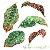 stock photo of tropical plants  - Set of watercolor tropical plants leaves - JPG