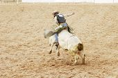 stock photo of brahma-bull  - A bull rider hangs on for 8 seconds to receive a score at a rodeo - JPG