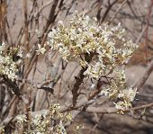 pic of jasmine  - Beautiful tiny flowers of jasmine - JPG