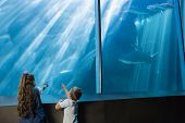 foto of inquisition  - Little siblings looking at fish tank at the aquarium - JPG