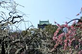 pic of kinky  - Osaka Castle and plum blossoms in spring season - JPG