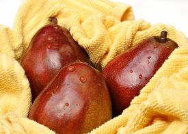stock photo of anjou  - Three organic healthy red Anjou pears in a yellow towel after being washed - JPG