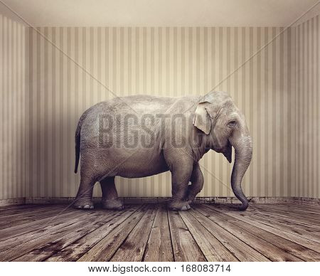 Elephant in the room metaphor