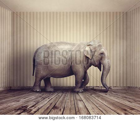 Elephant in the room metaphor