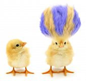 Two chicks one crazy with even crazier hair           poster