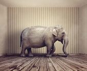 Elephant in the room metaphor for an obvious problem or risk no one wants to discuss poster