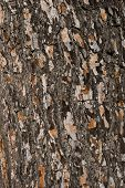 Wooden bark background
