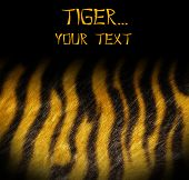tiger skin template