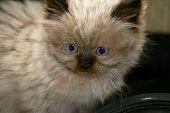 Curious Cat