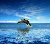 picture of bottlenose dolphin  - Dolphins - JPG