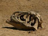 Skull Dinosaur