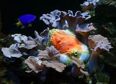 stock photo of under sea  - The Sea Orange and Reef Fish - JPG