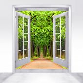 Opened door to early morning in green oak alley - conceptual image - environmental business metaphor.