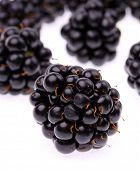 The blackberry (Rubus fruticosus)  is sometimes used in herbal medicine as a treatment for diarrhea