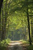 Sunny Autumnal Ground Road